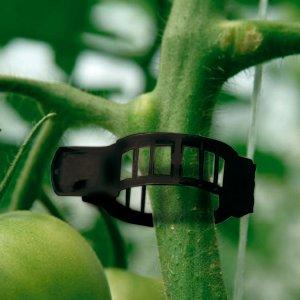 clips para cultivo de tomate