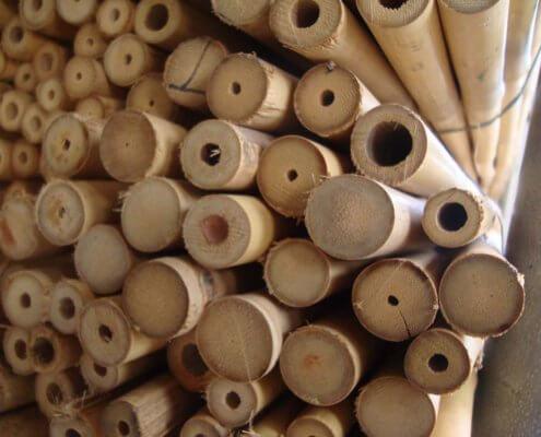 Cañas Tailandesas de bambú