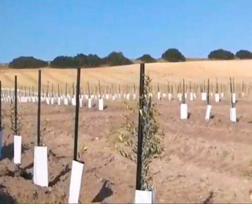 Plantación con Ecotutor