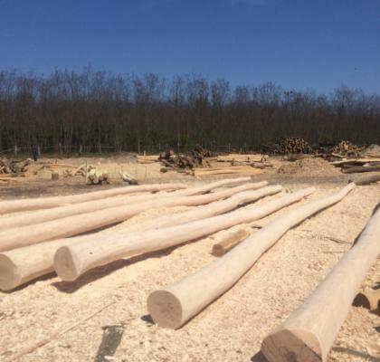 venta de postes de acacia