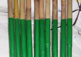 Bambú con la base plastificada