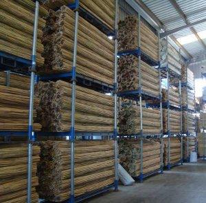 bambú tailandés
