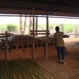 bambu decorativo