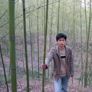 bambú decorativos