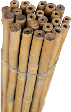 Bambú tutores