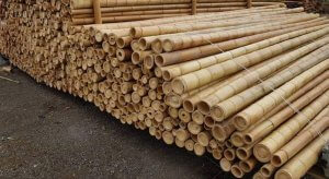 Bambú decorativo