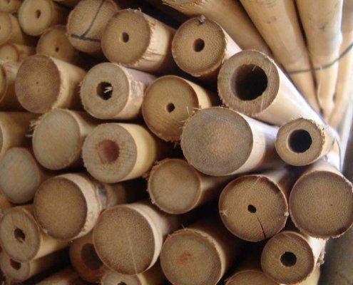 caña bambú tailandés para entutorado