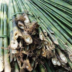 caña de bambú