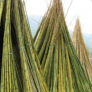 cañas bambú natural
