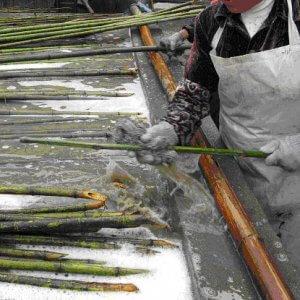 cañas de bambu lavado