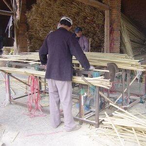 cañas de bambú cortadas