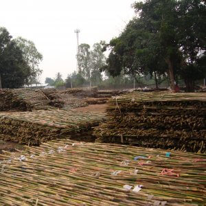 cañas de bambu naturales