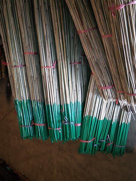 Cañas de bambú con la base plastificada