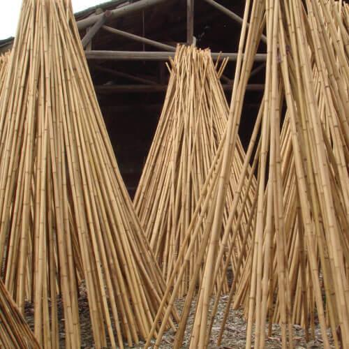 Secado al sol de las cañas de bambú.