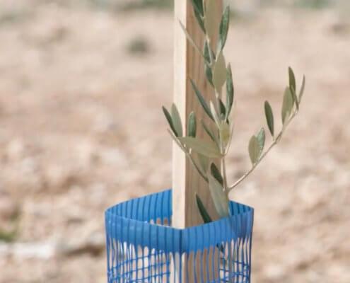 Poste de acacia y protector Planet