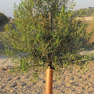 protector olivos