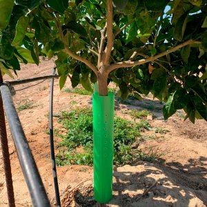 protectores naranjo plantacion