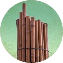 Tutor bambú tailandés
