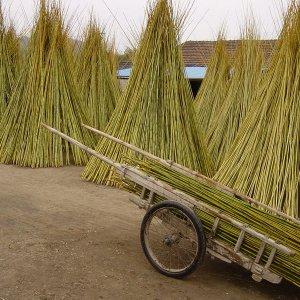 tutores de bambú chino
