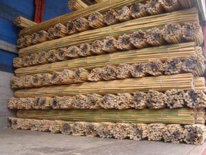 Tutores de caña de bambú tailandés cargado