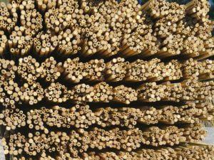 Tutores de caña de bambú tailandés cortado